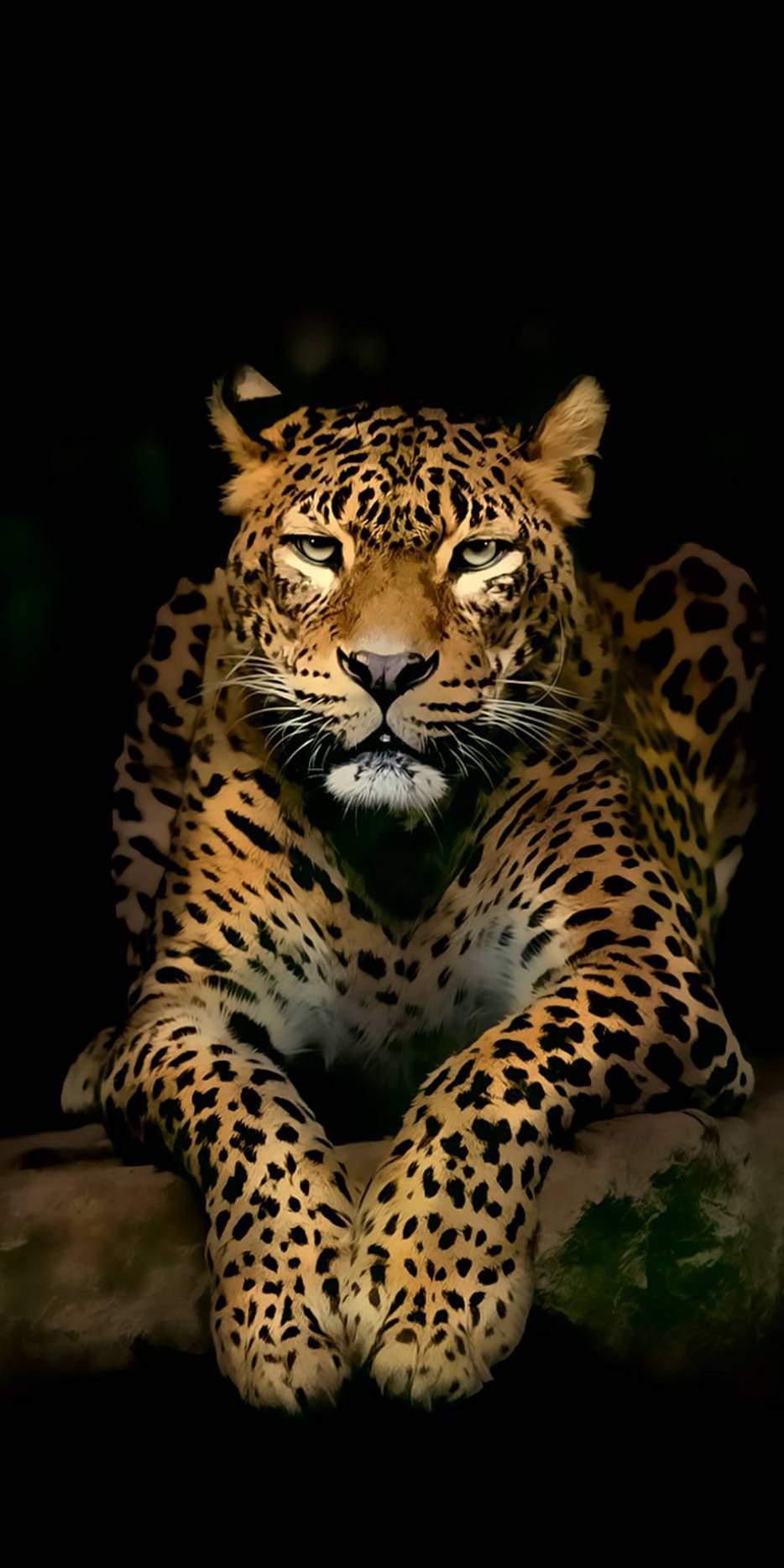 Leopard in Dark iPhone Wallpaper