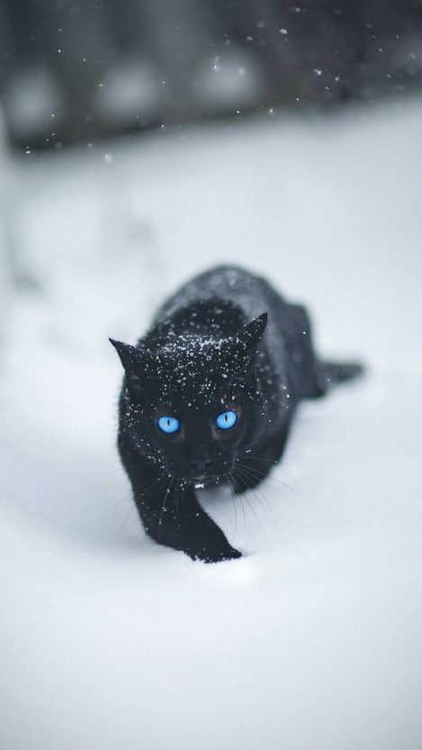 Black Cat iPhone Wallpaper
