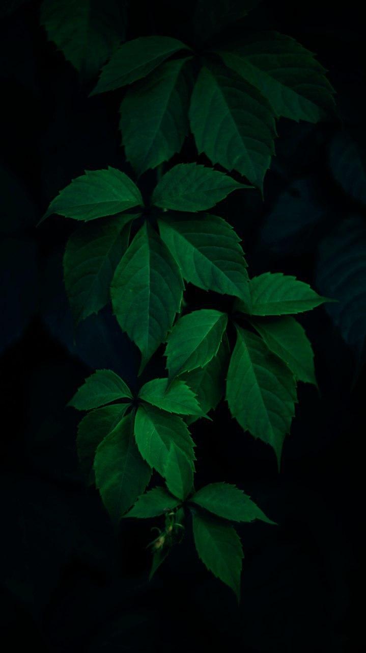 Dark Plants Nature iPhone Wallpaper