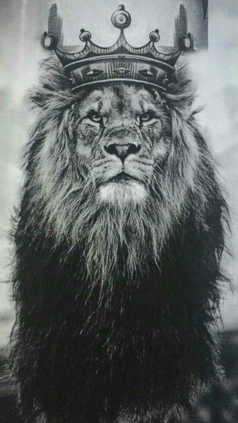 King Lion iPhone Wallpaper