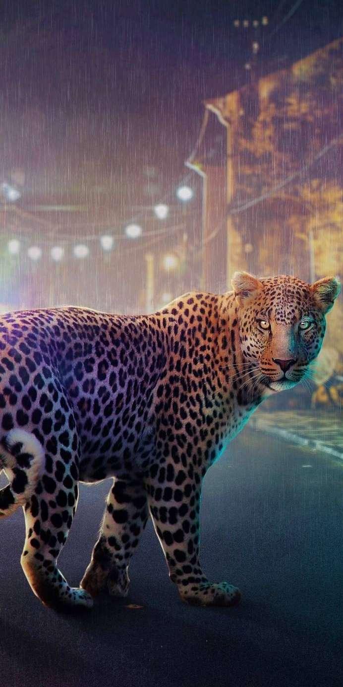 Night Jaguar iPhone Wallpaper