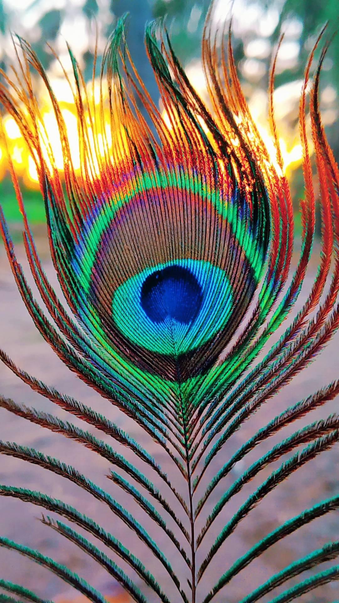 Peep of peacock iPhone Wallpaper