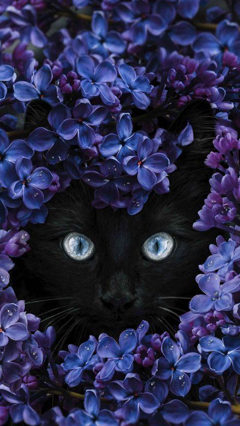 Black Cat Flowers iPhone Wallpaper