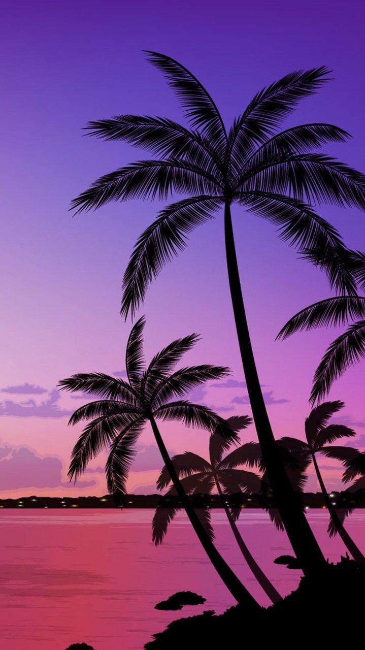 Palm Trees Beach iPhone Wallpaper