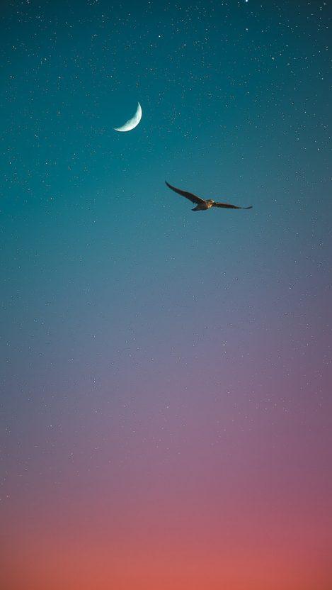 Sea Bird Sky Stars iPhone Wallpaper