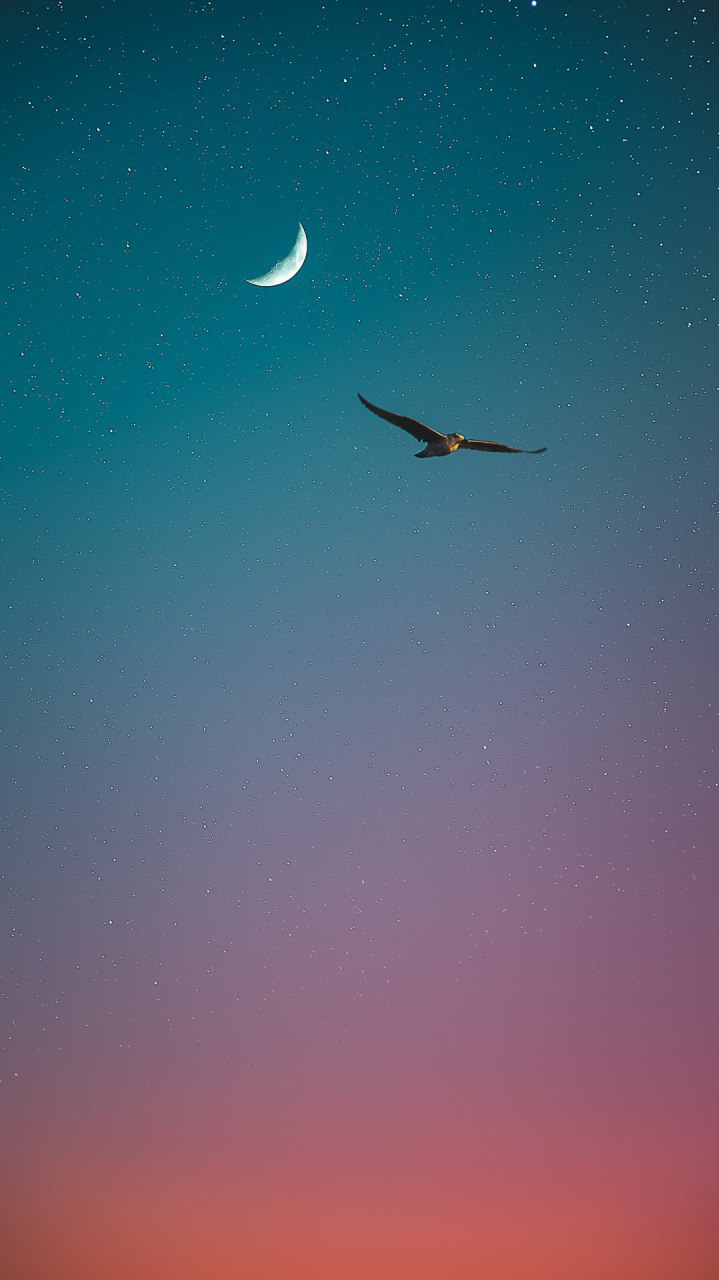 Sea Bird Sky Stars iPhone Wallpaper