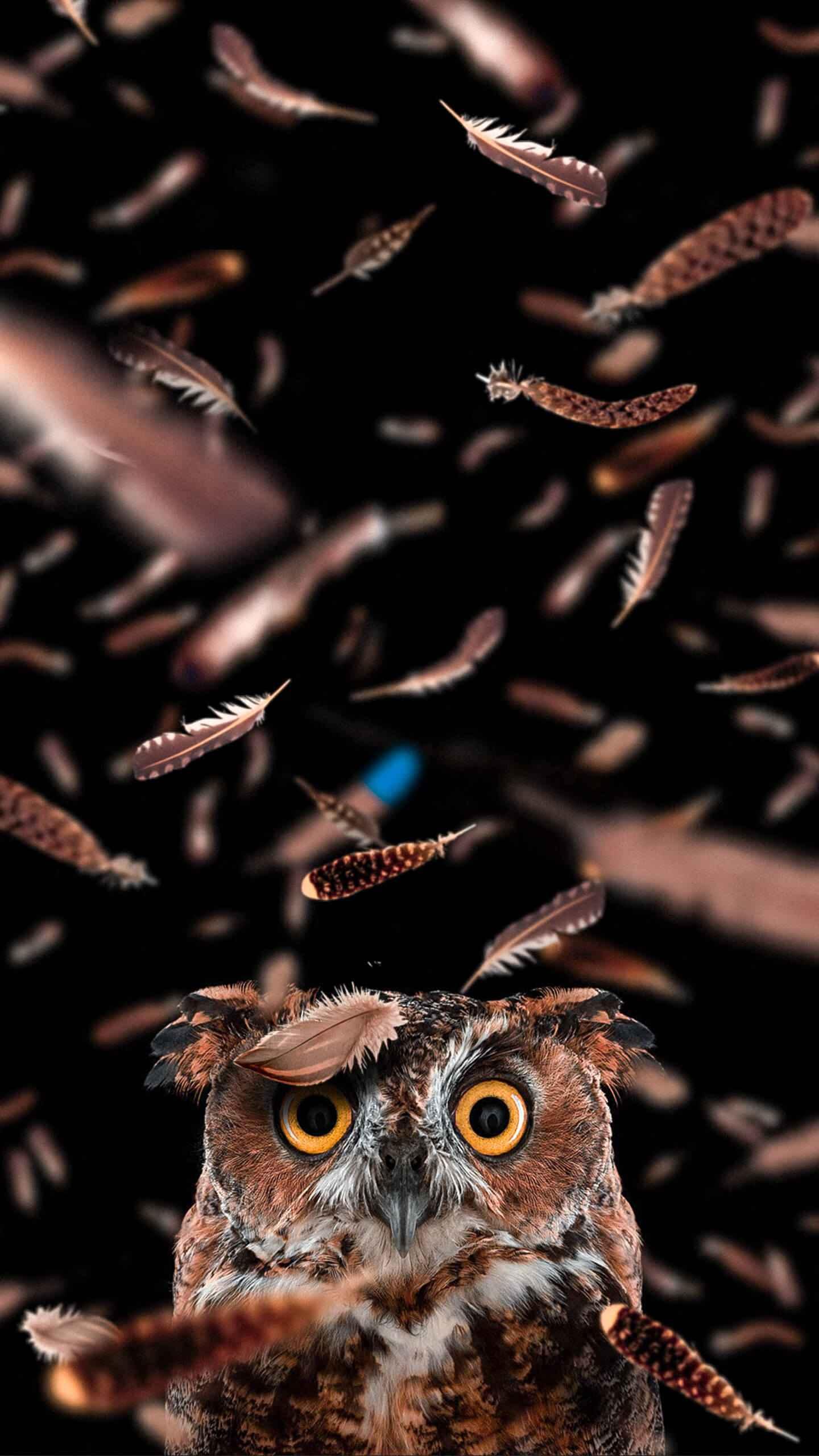 Curious owl iPhone Wallpaper