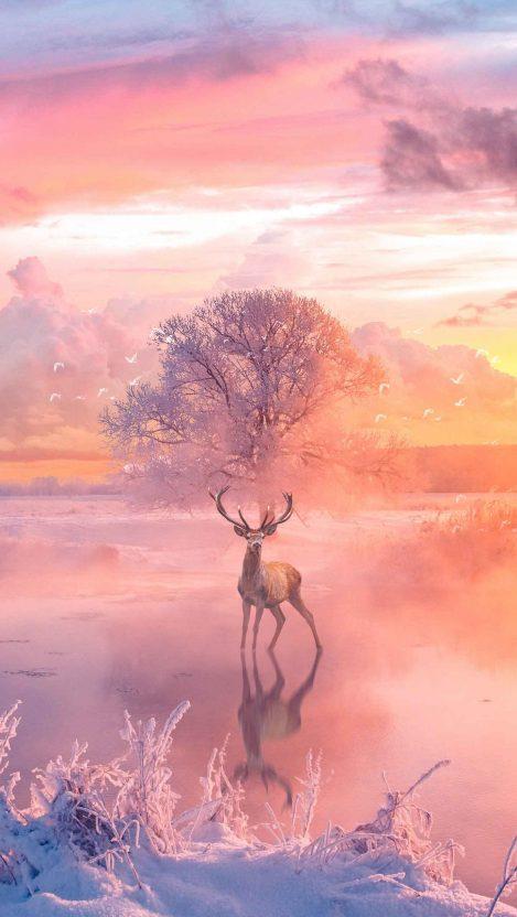 Deer Nature Life iPhone Wallpaper