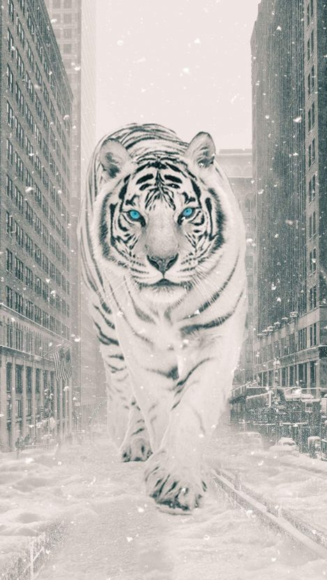The White Tiger iPhone Wallpaper