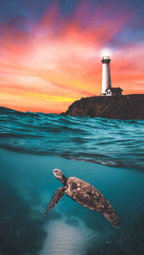 Turtle and the Lighthouse iPhone Wallpaper
