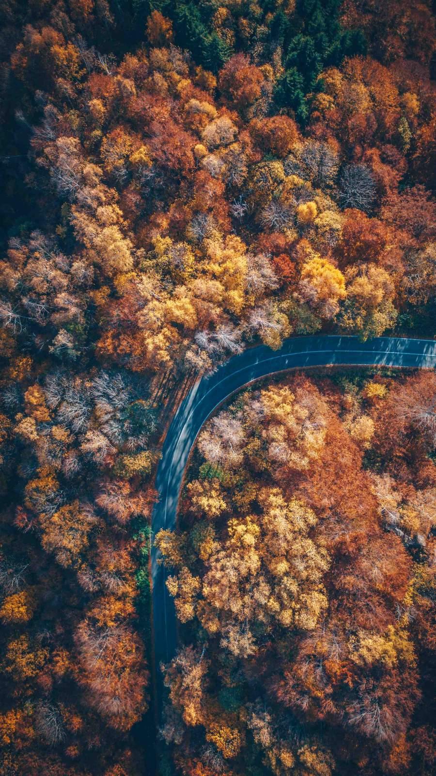 Autumn Nature Road Aerial View iPhone Wallpaper