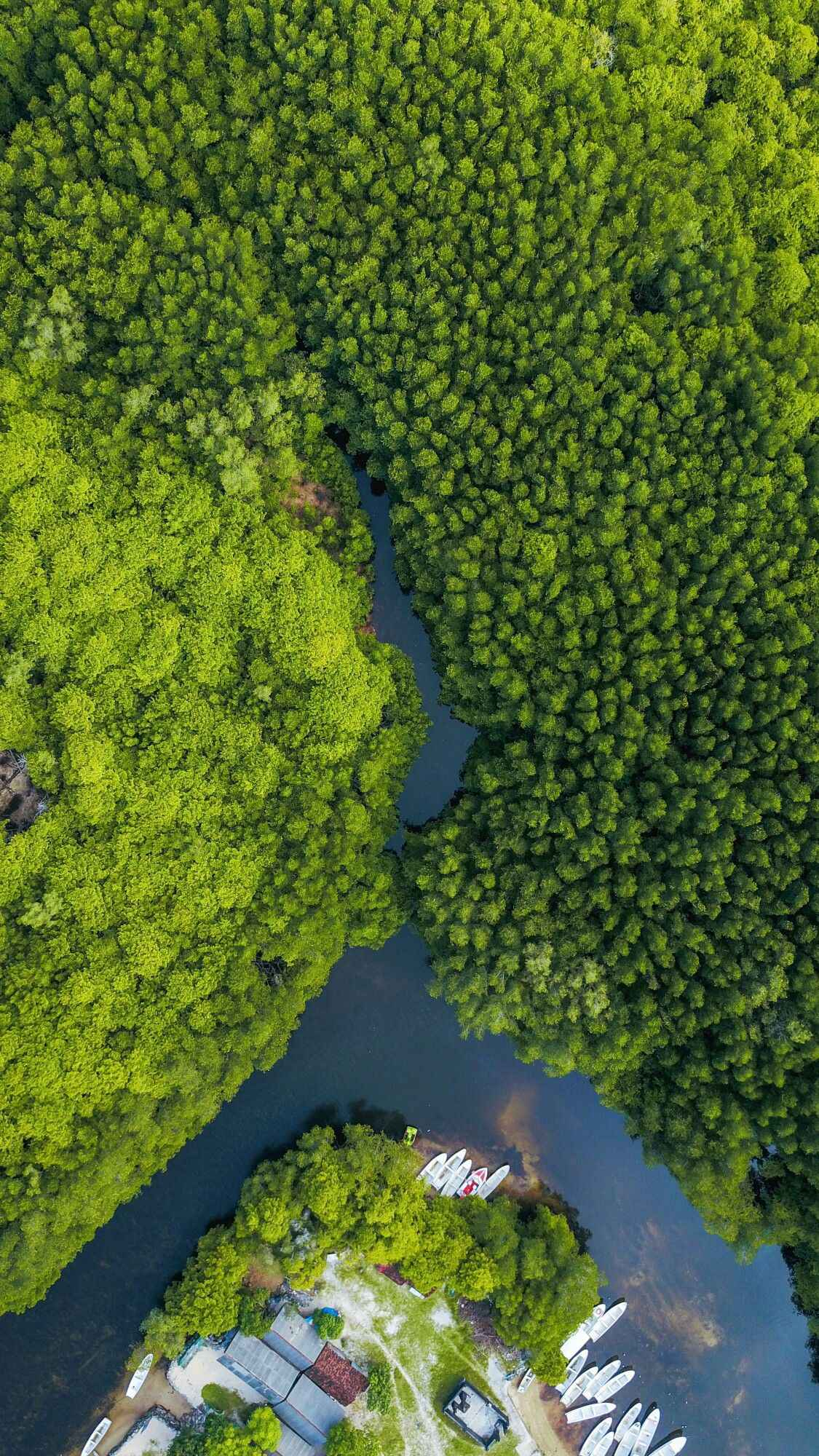 Forest Water Aerial View iPhone Wallpaper