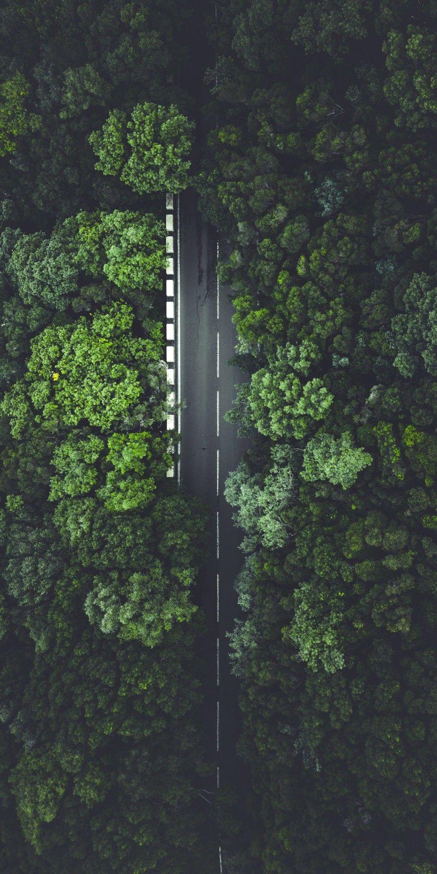 Green Tree Road iPhone Wallpaper