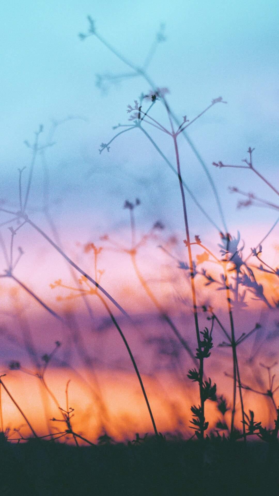 Macro Plants Sunrise iPhone Wallpaper