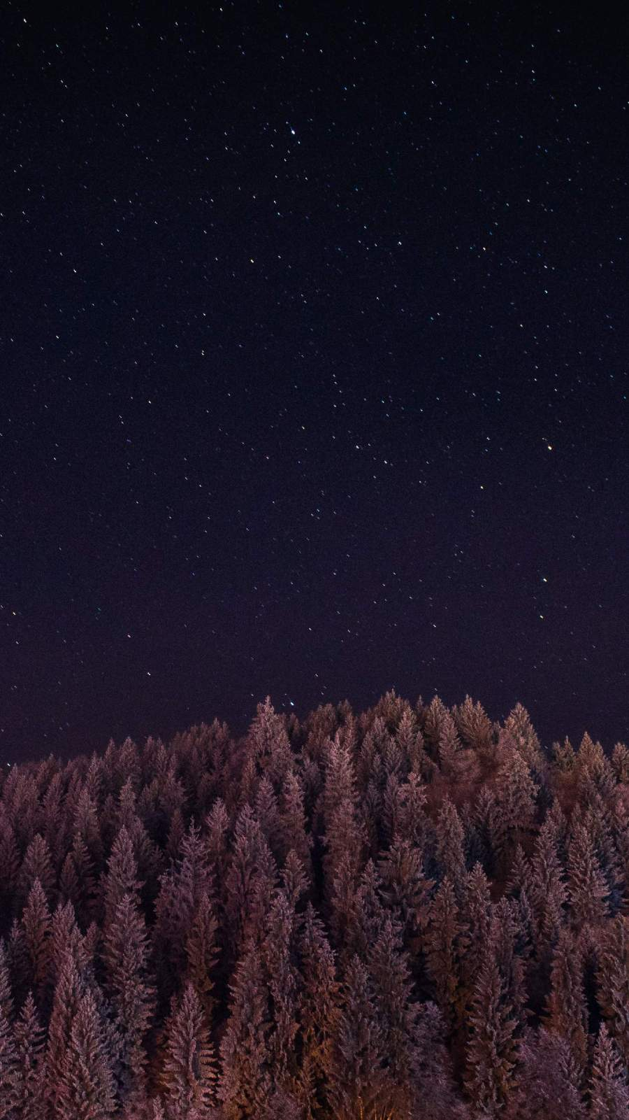 Night Sky Forest iPhone Wallpaper