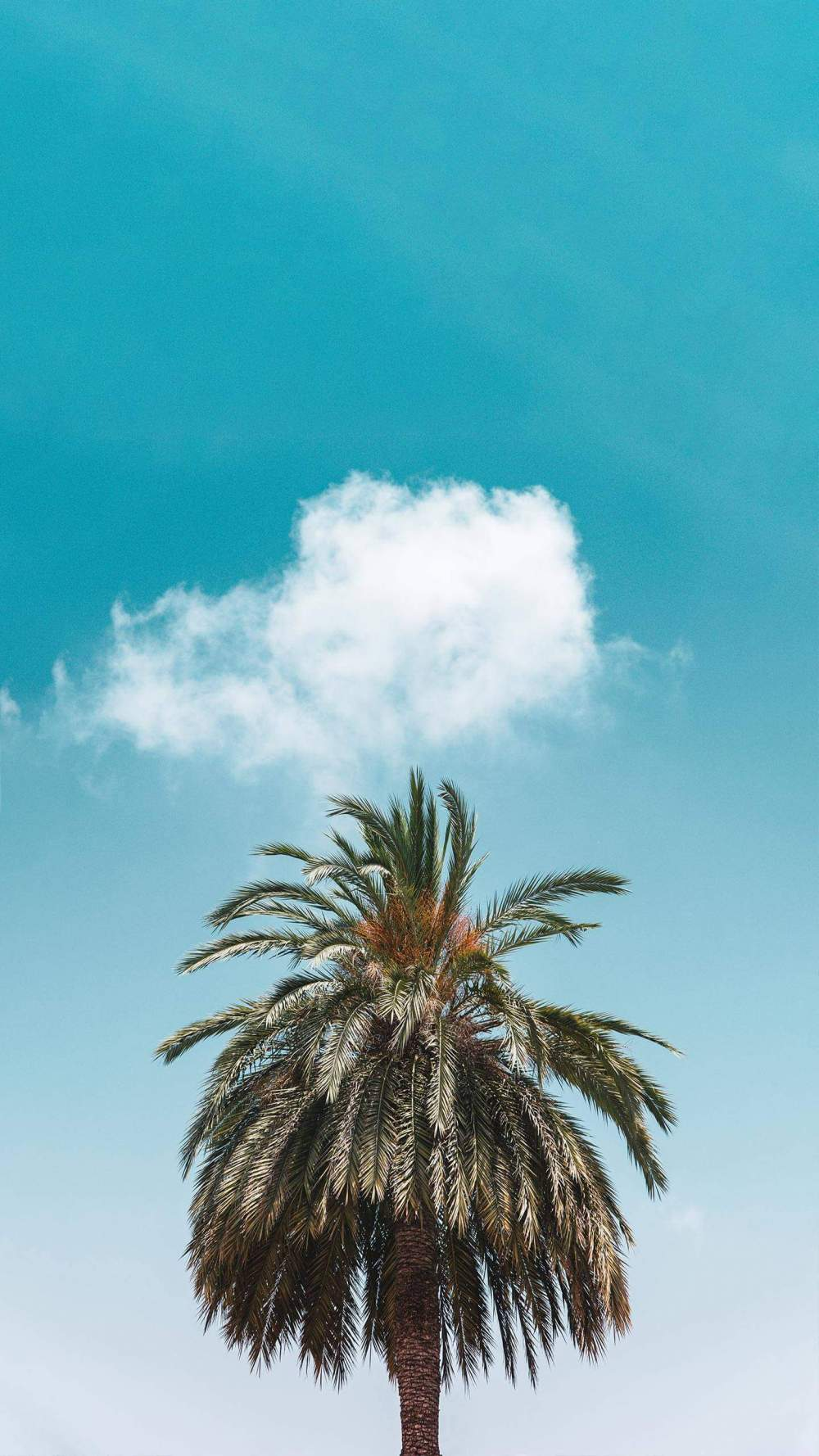 Palm Tree Clouds iPhone Wallpaper