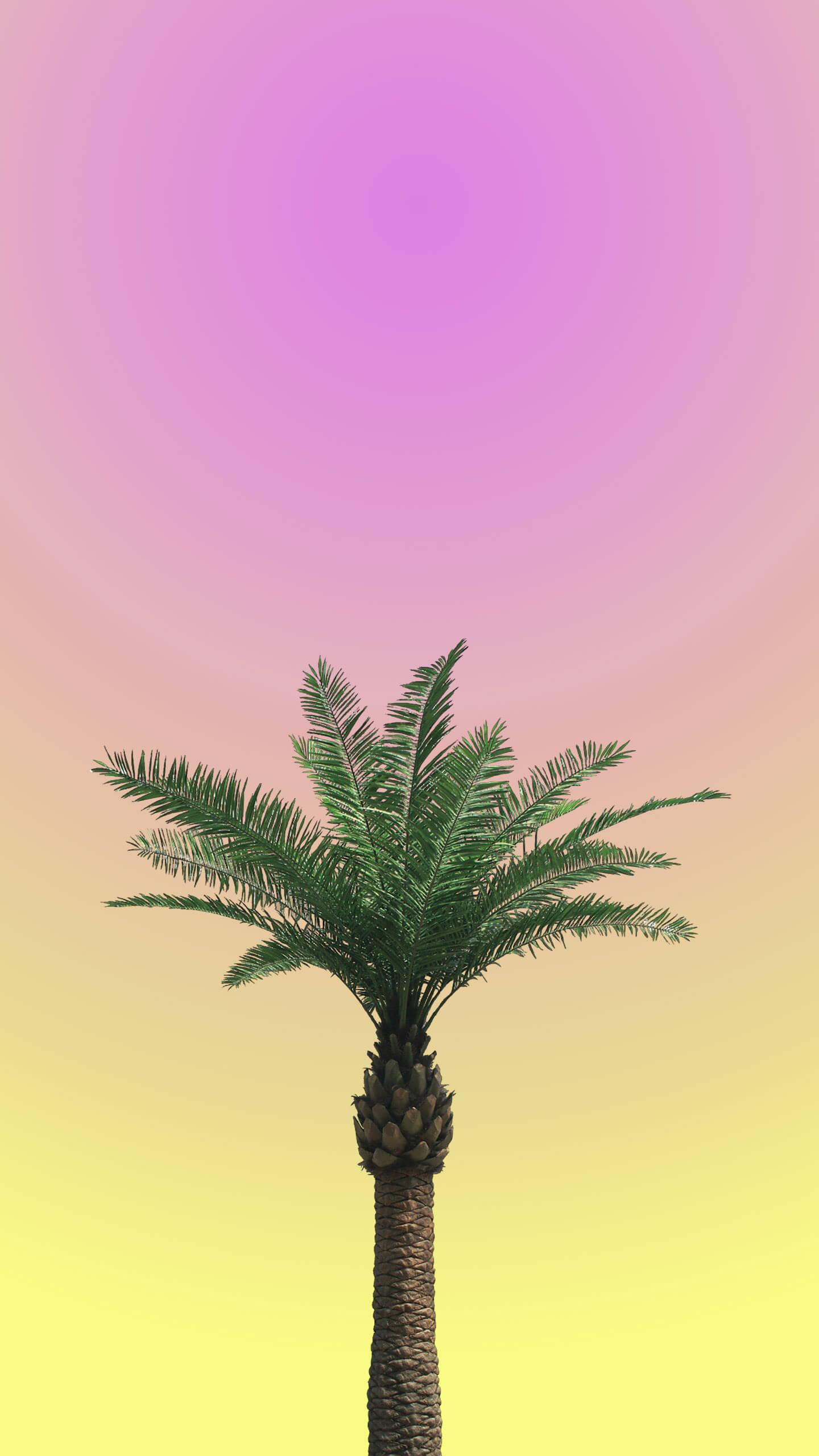 Palm Tree Minimal Sunset iPhone Wallpaper