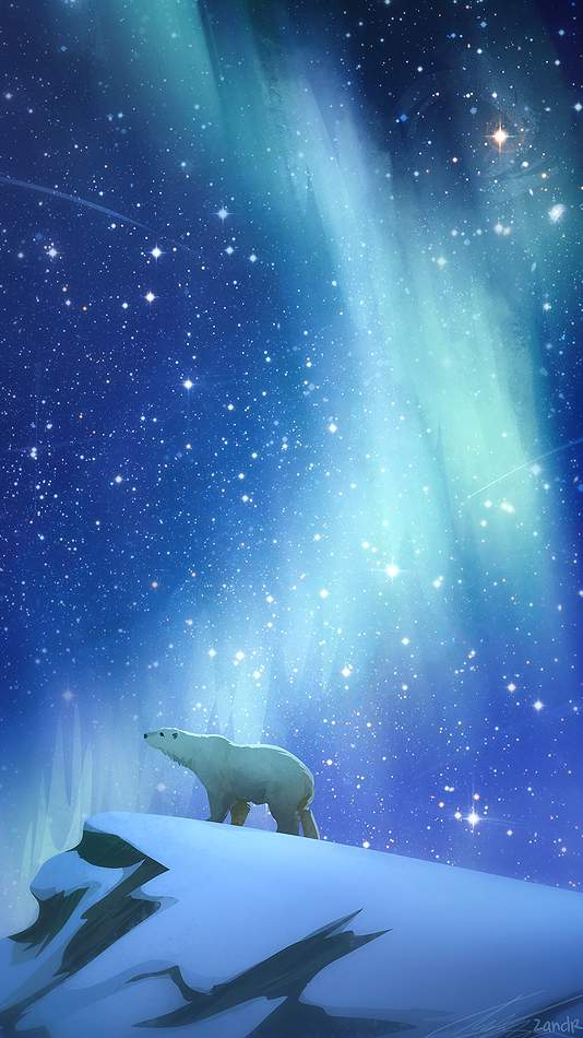 Polar Bear Night iPhone Wallpaper