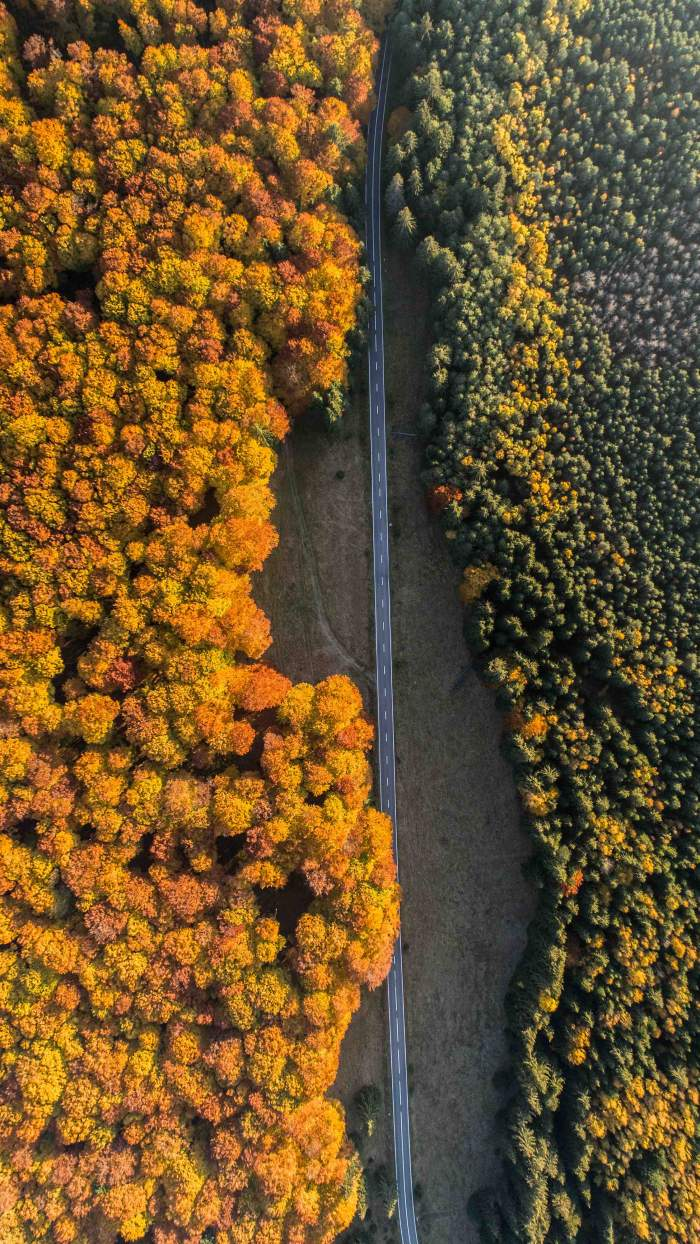 Canadian Road Autumn Aerial View iPhone Wallpaper