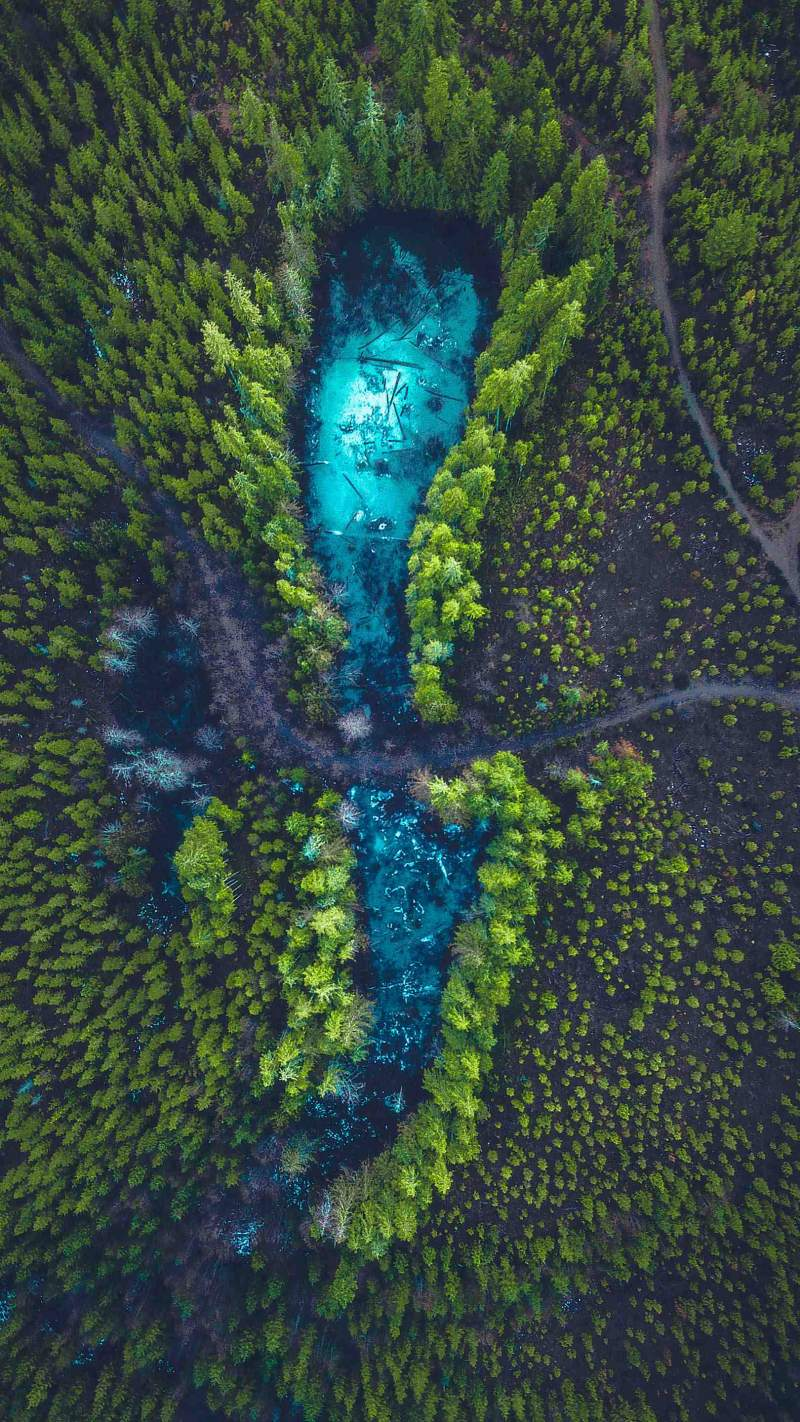 Forest Frozen Clusters Aerial View iPhone Wallpaper