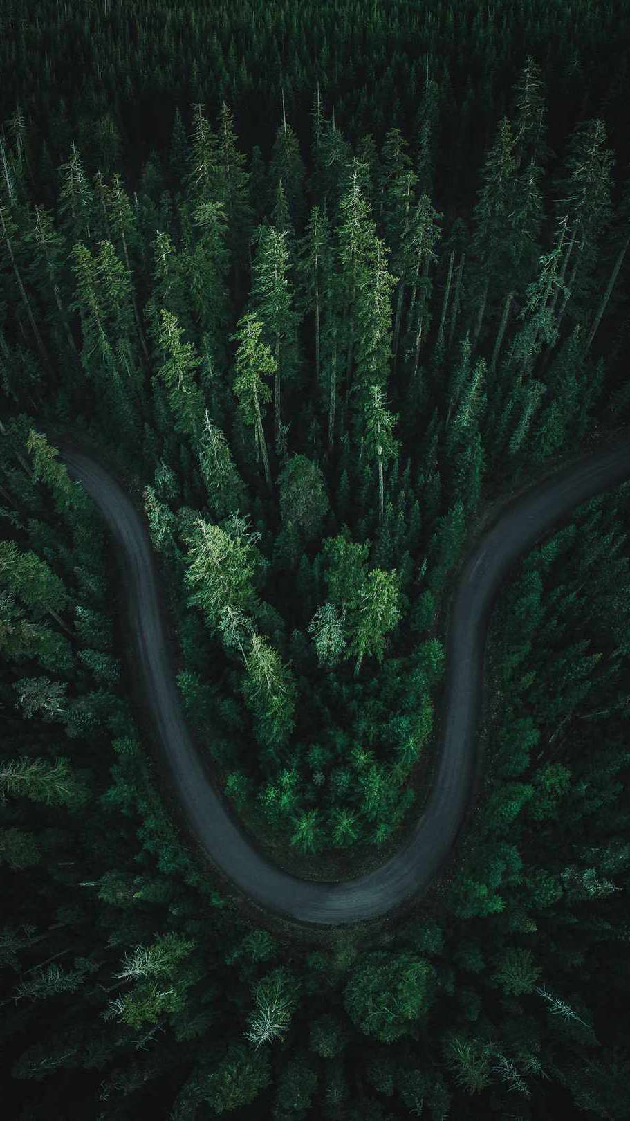 Forest Road Aerial iPhone Wallpaper