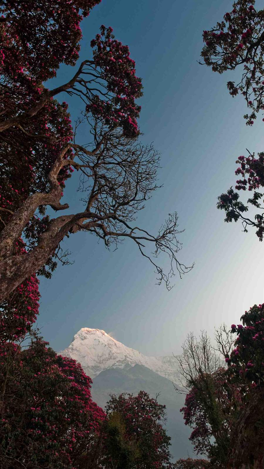 Himalaya iPhone Wallpaper
