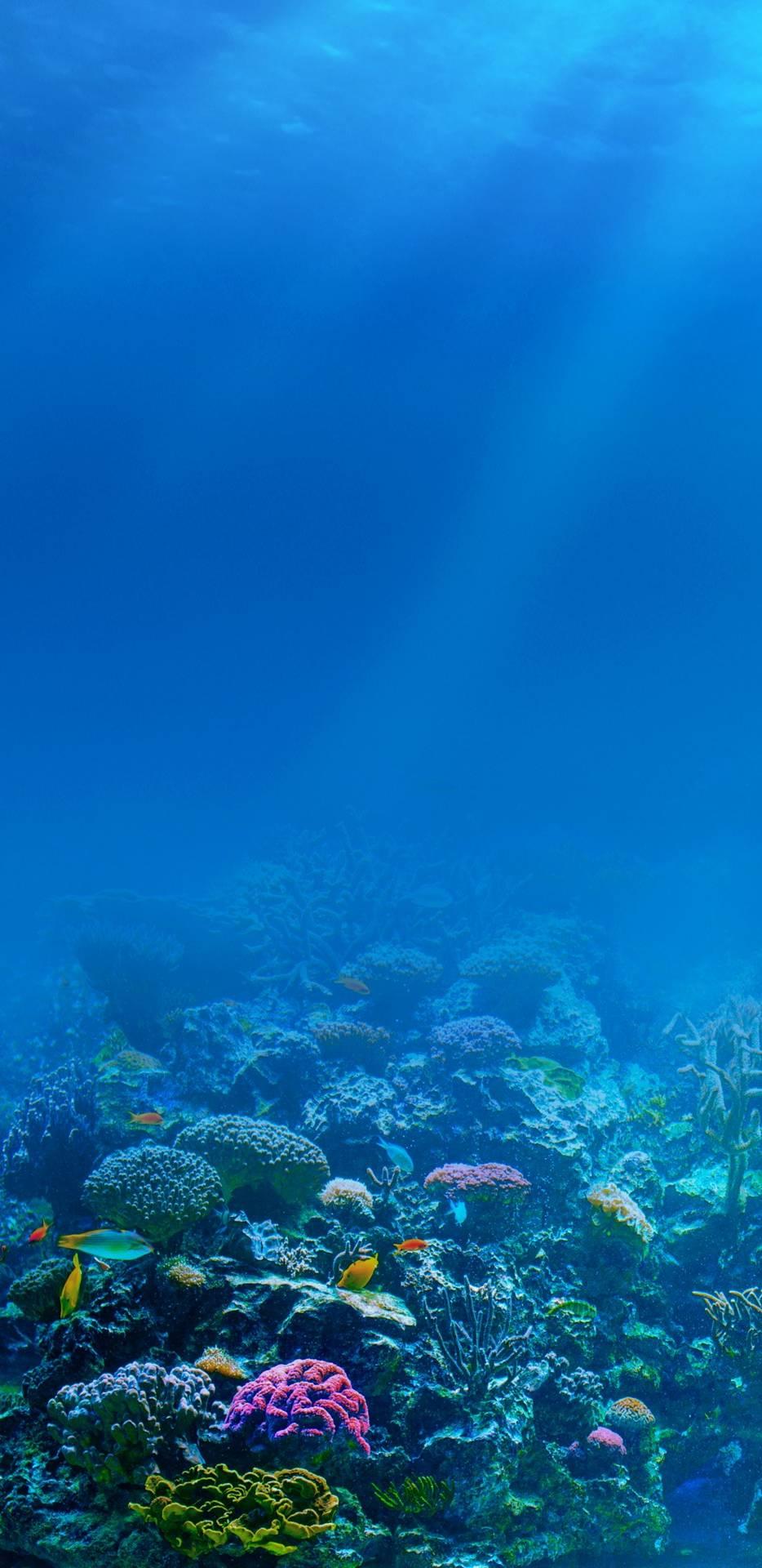 Underwater iPhone Wallpaper