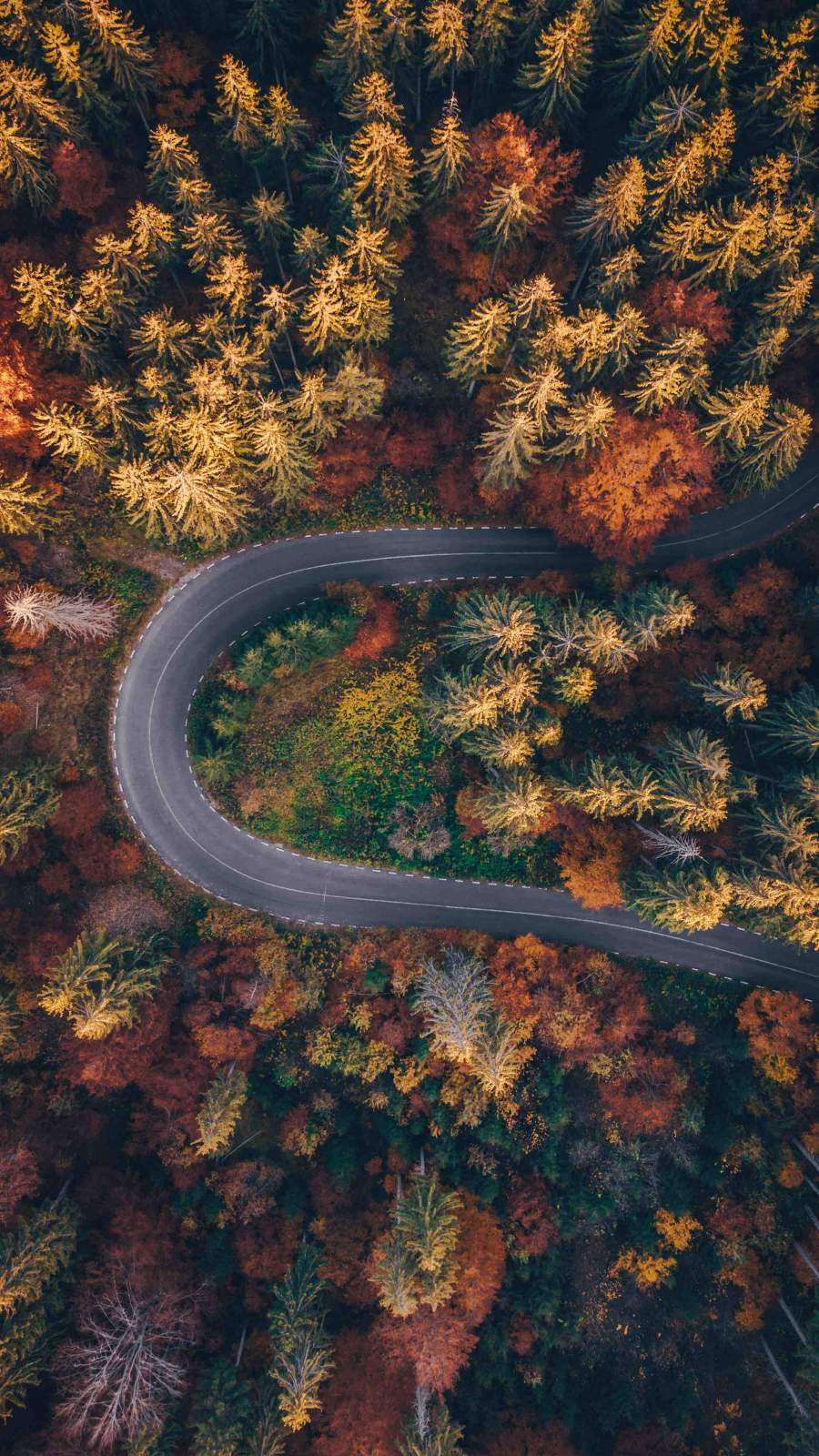 U Road Autumn Forest Aerial View iPhone Wallpaper