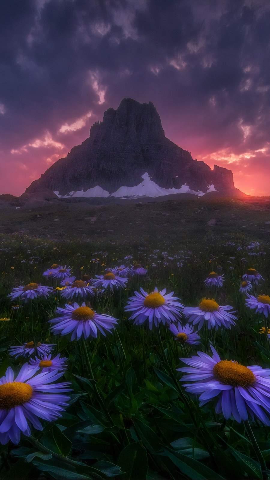 Flowers Field Beautiful Mountain iPhone Wallpaper