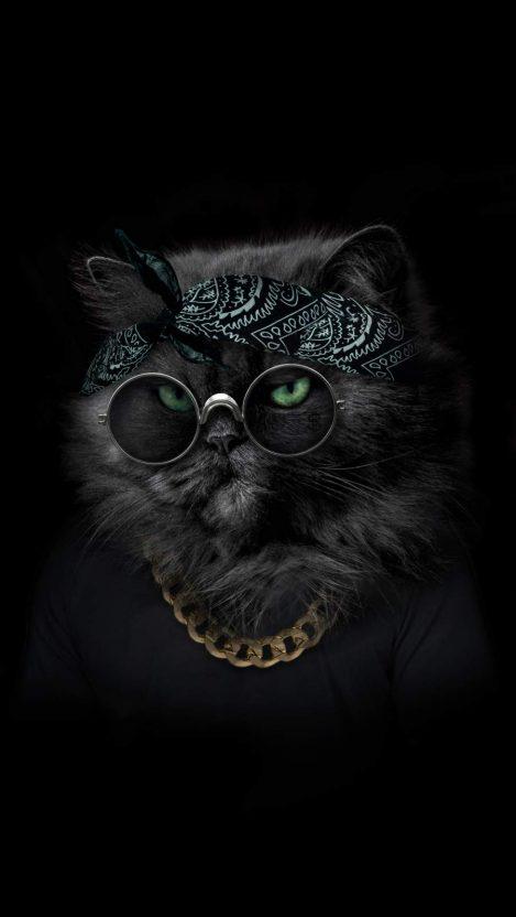 Gangster Kitten iPhone Wallpaper