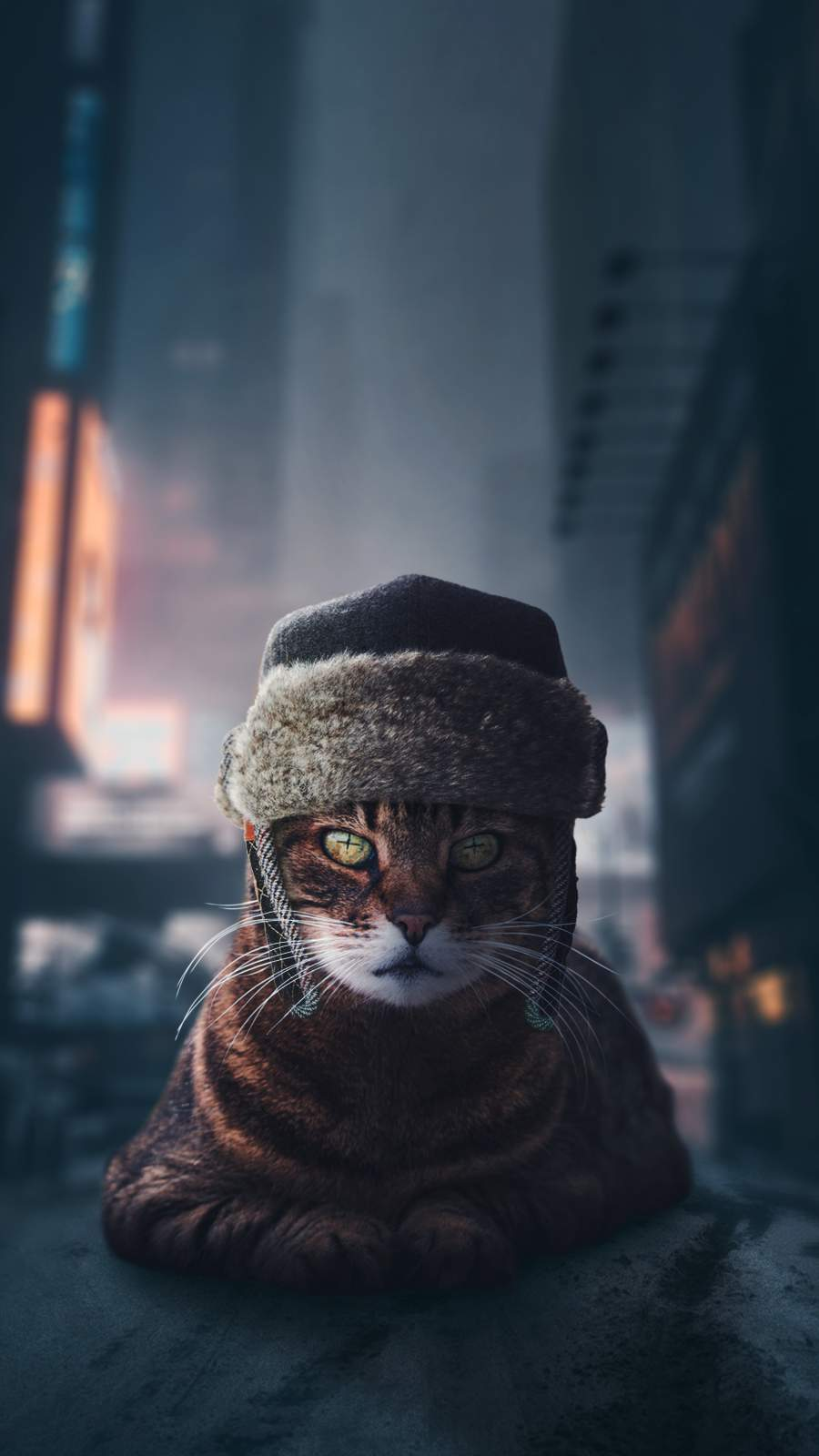 Russian Cat iPhone Wallpaper