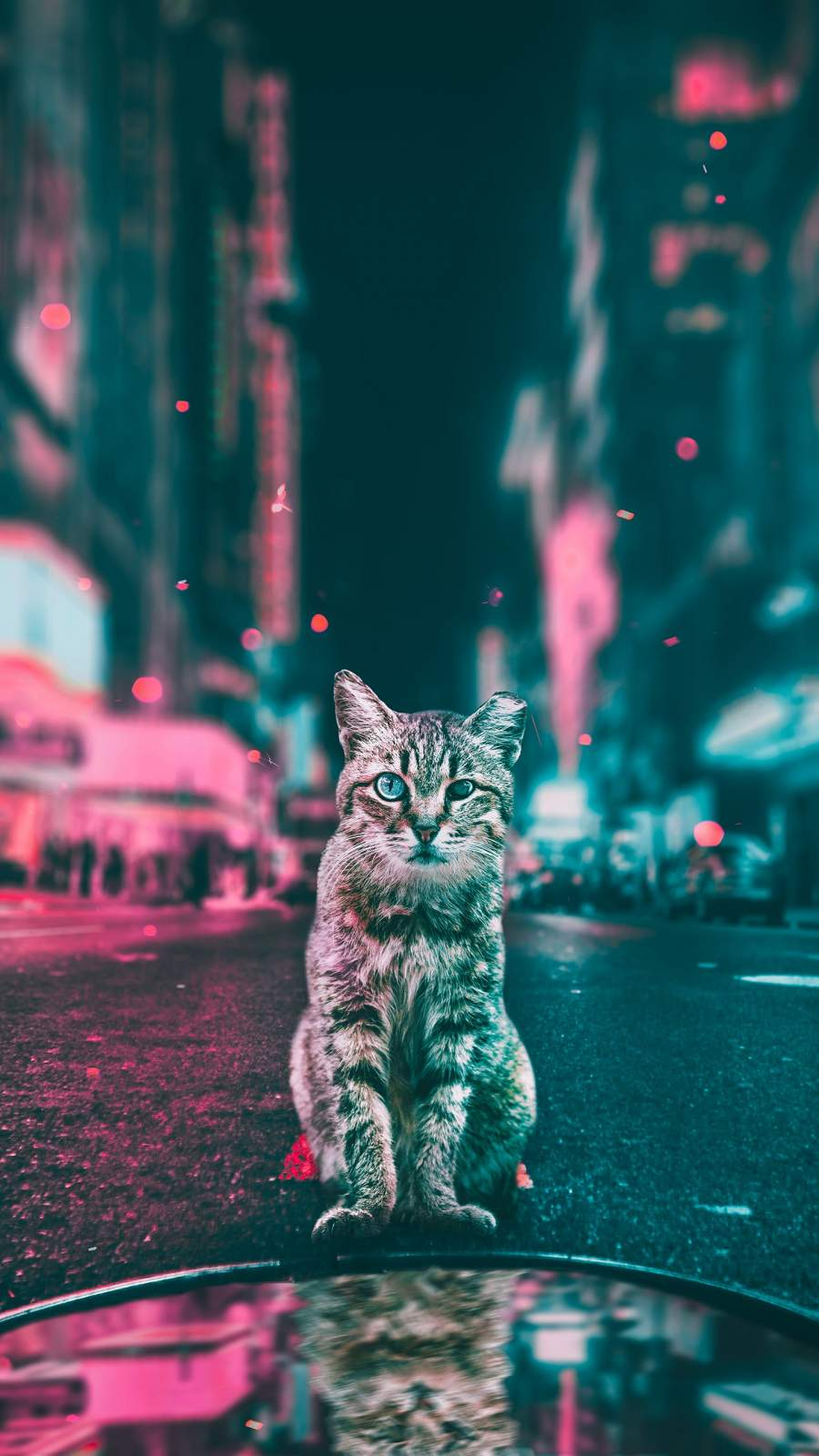 Cat in the City iPhone Wallpaper