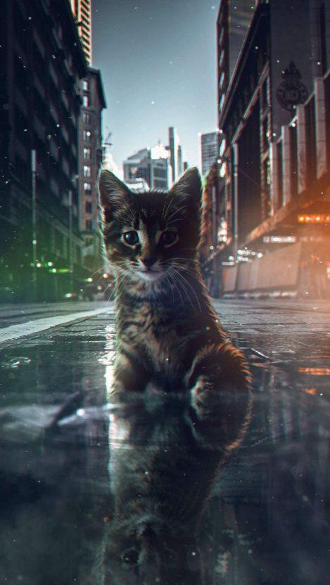 Glitch Kitten iPhone Wallpaper