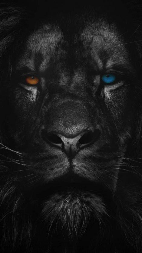 Heterochromia Lion iPhone Wallpaper