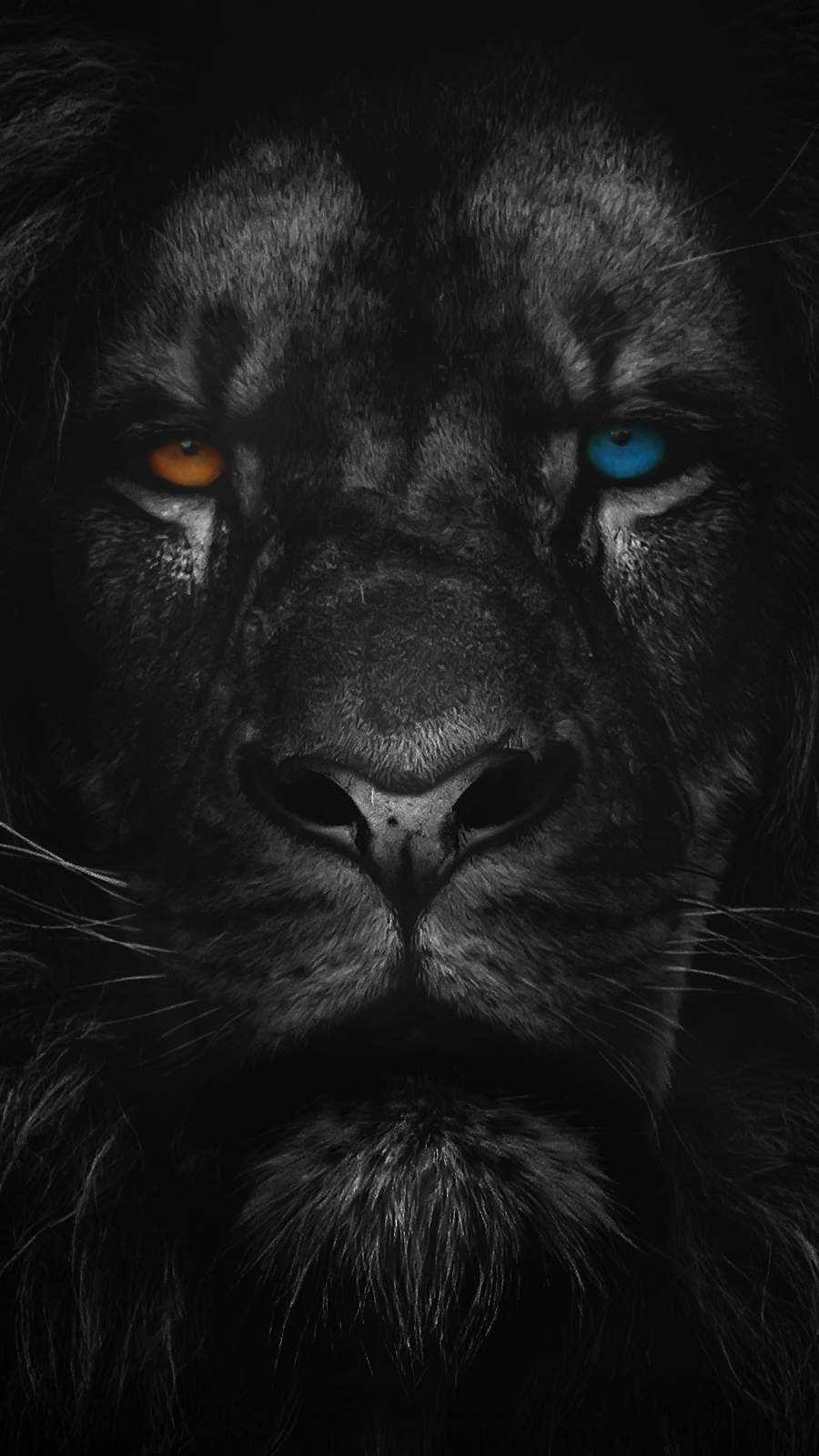 Heterochromia Lion iPhone Wallpaper