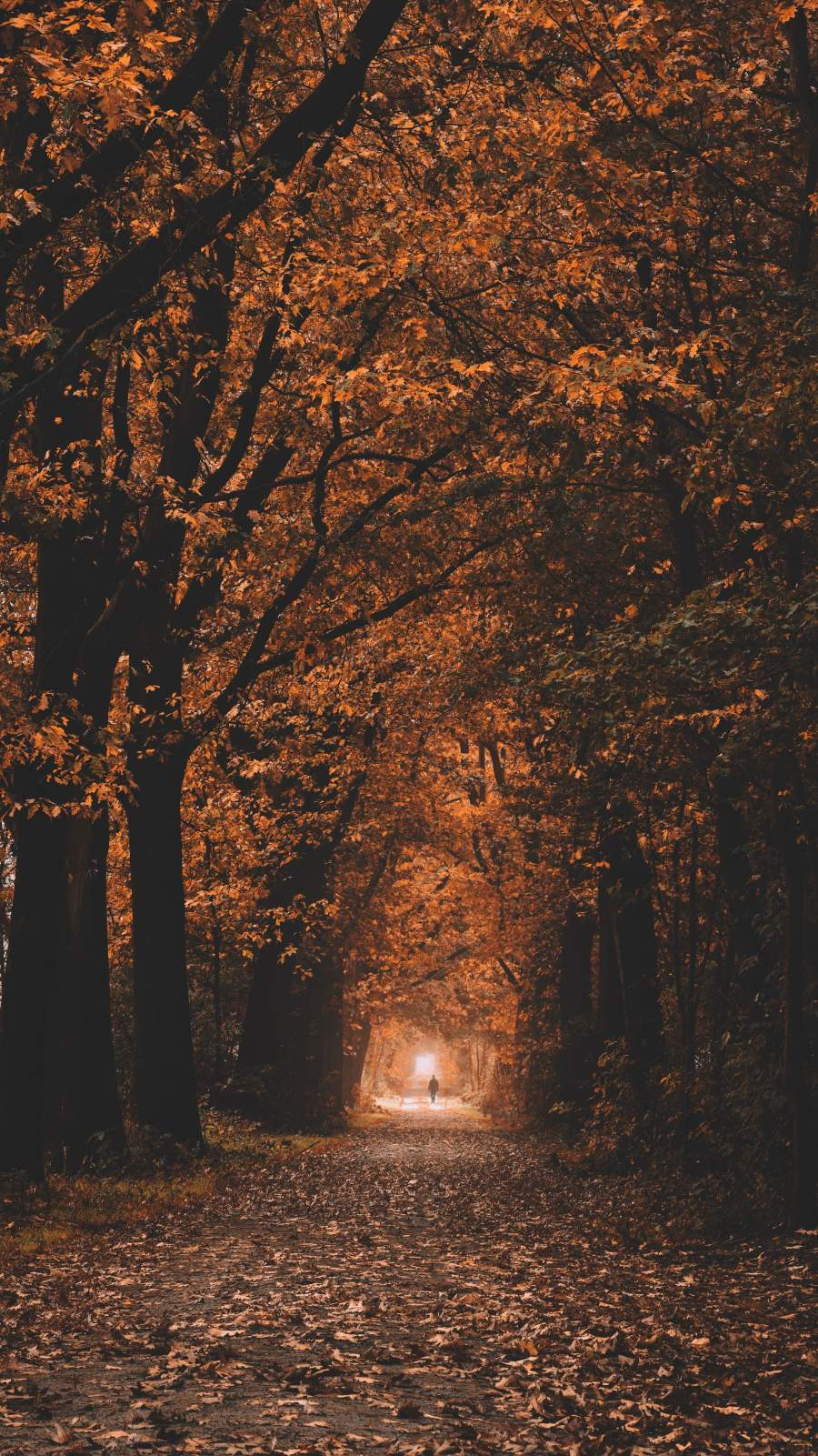 Autumn Color iPhone Wallpaper