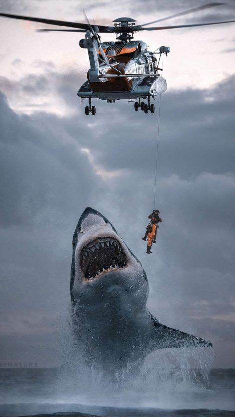 Coast Guard Shark Attack iPhone Wallpaper