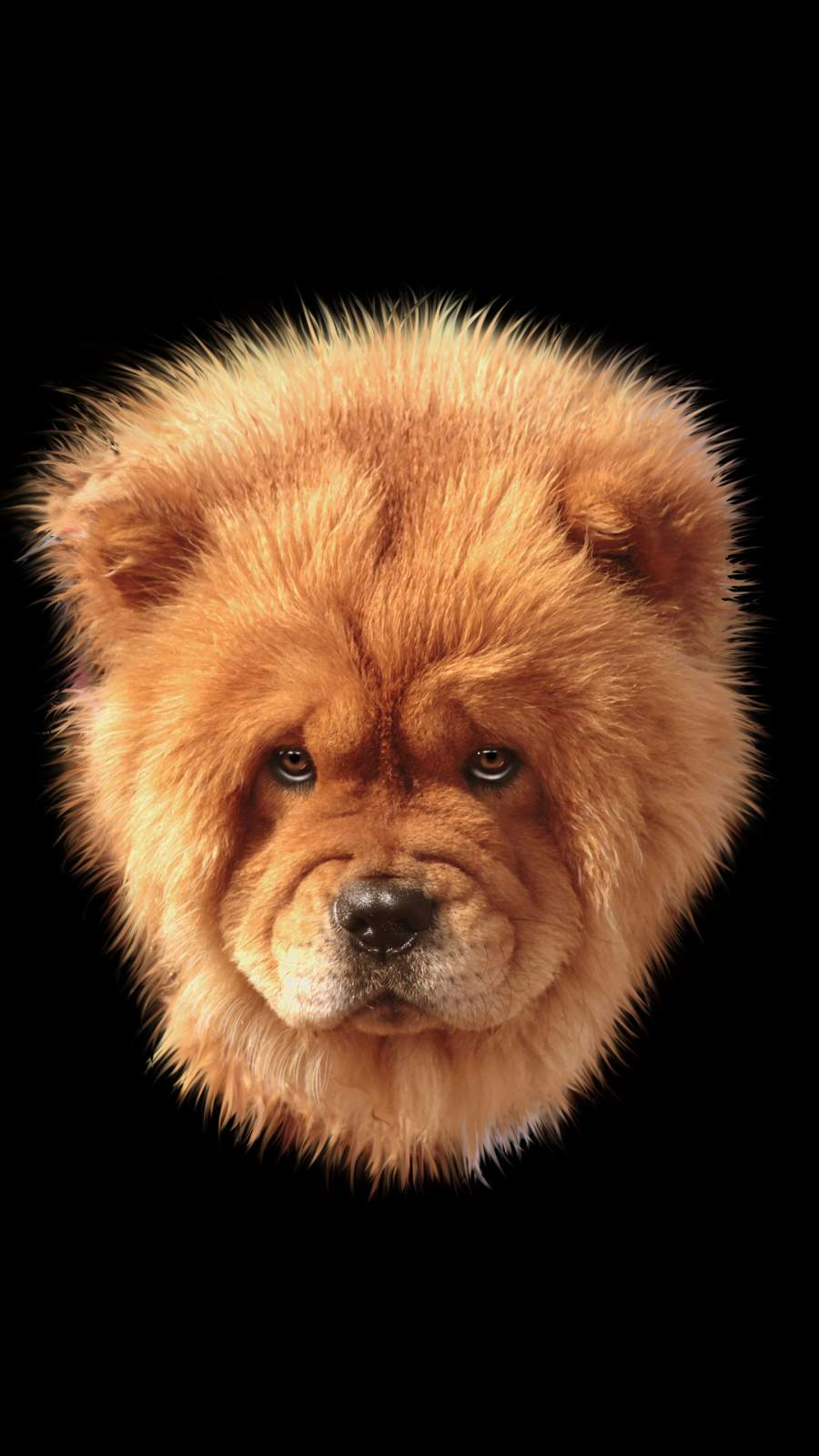 Lion Dog iPhone Wallpaper