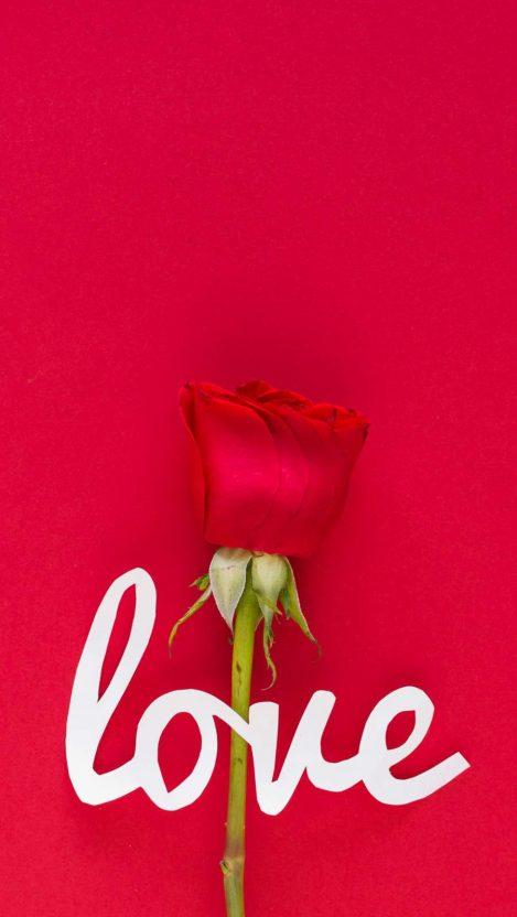 Love Rose iPhone Wallpaper