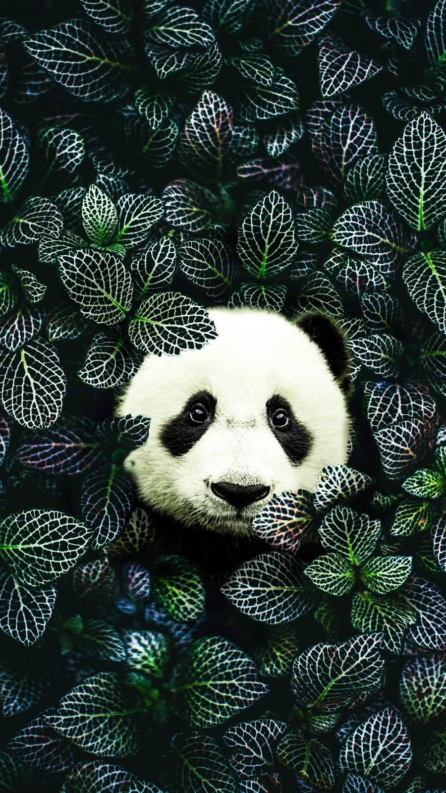 Panda Nature iPhone Wallpaper