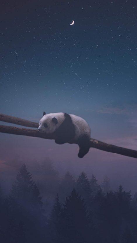 Sleeping Panda iPhone Wallpaper