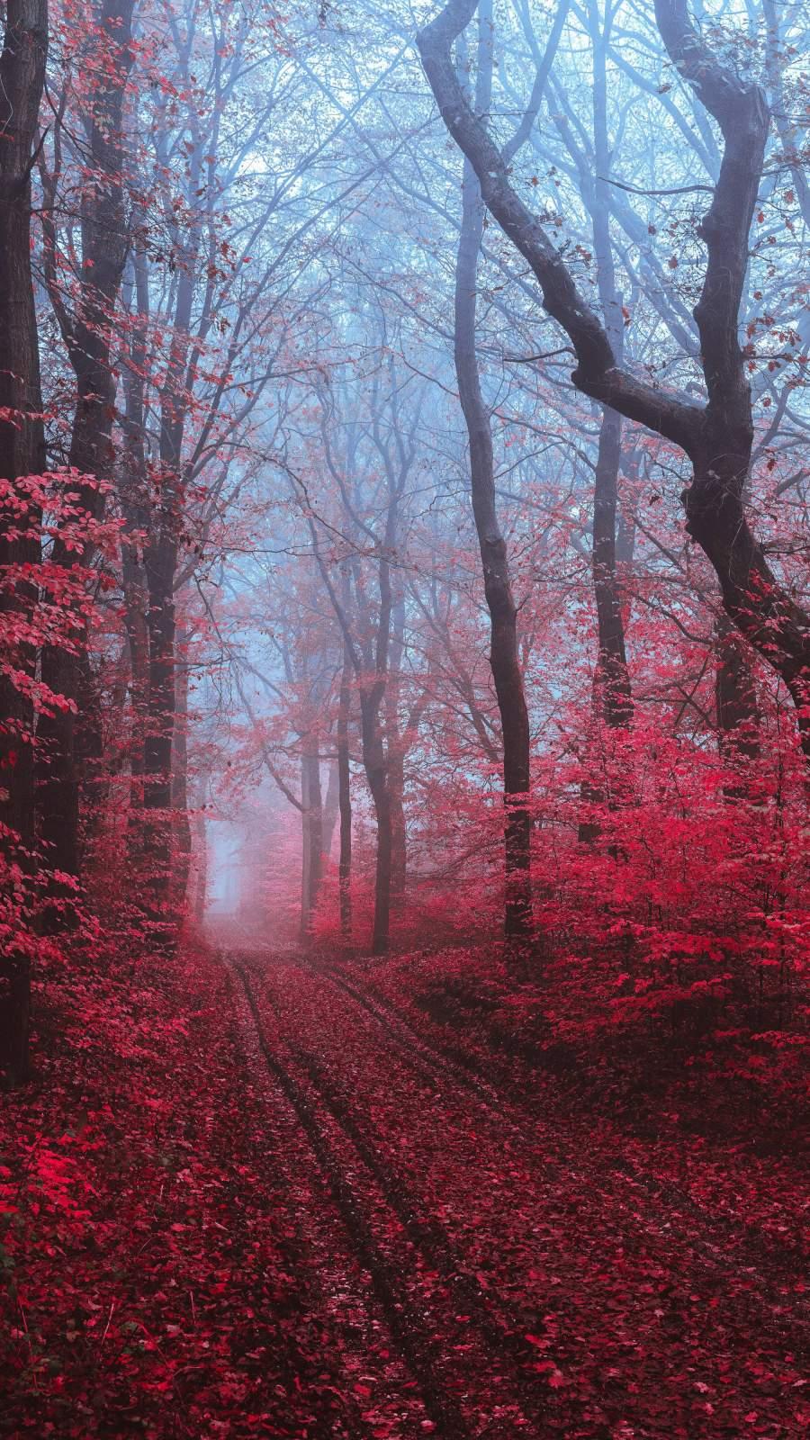 Autumn iPhone Wallpaper