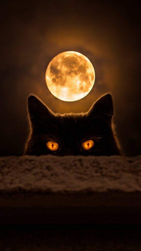 Dark Cat Eyes iPhone Wallpaper