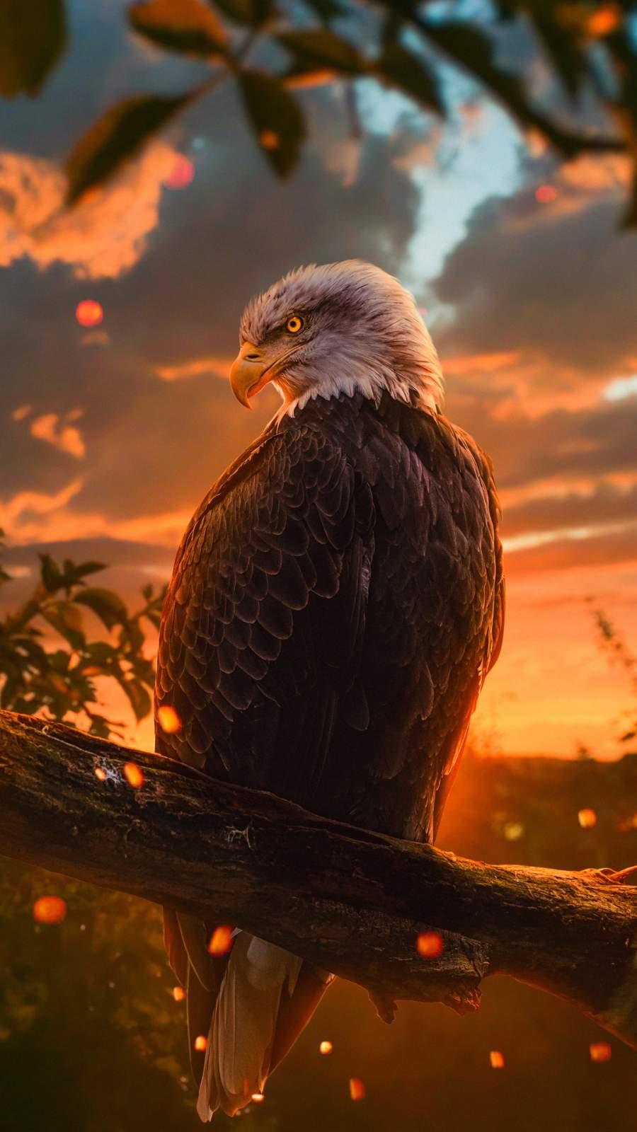 Golden Eagle iPhone Wallpaper
