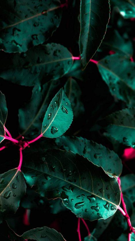Leaves Drops iPhone Wallpaper