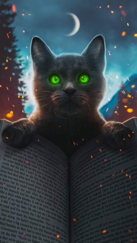 Magic Cat iPhone Wallpaper