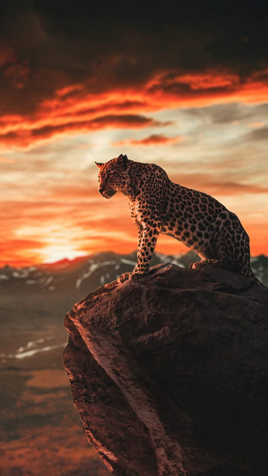 Panther Morning iPhone Wallpaper