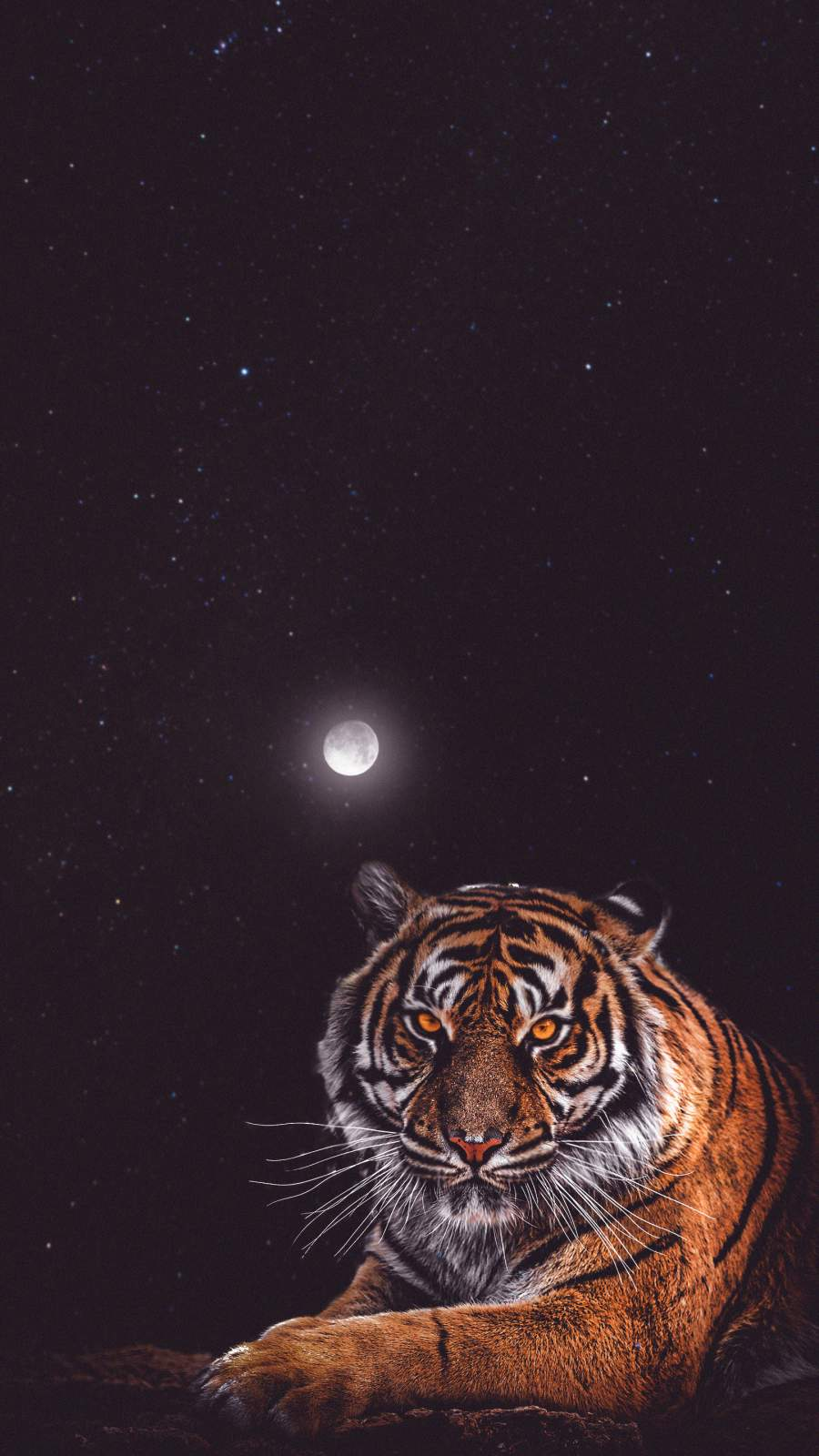 Tiger Moon iPhone Wallpaper