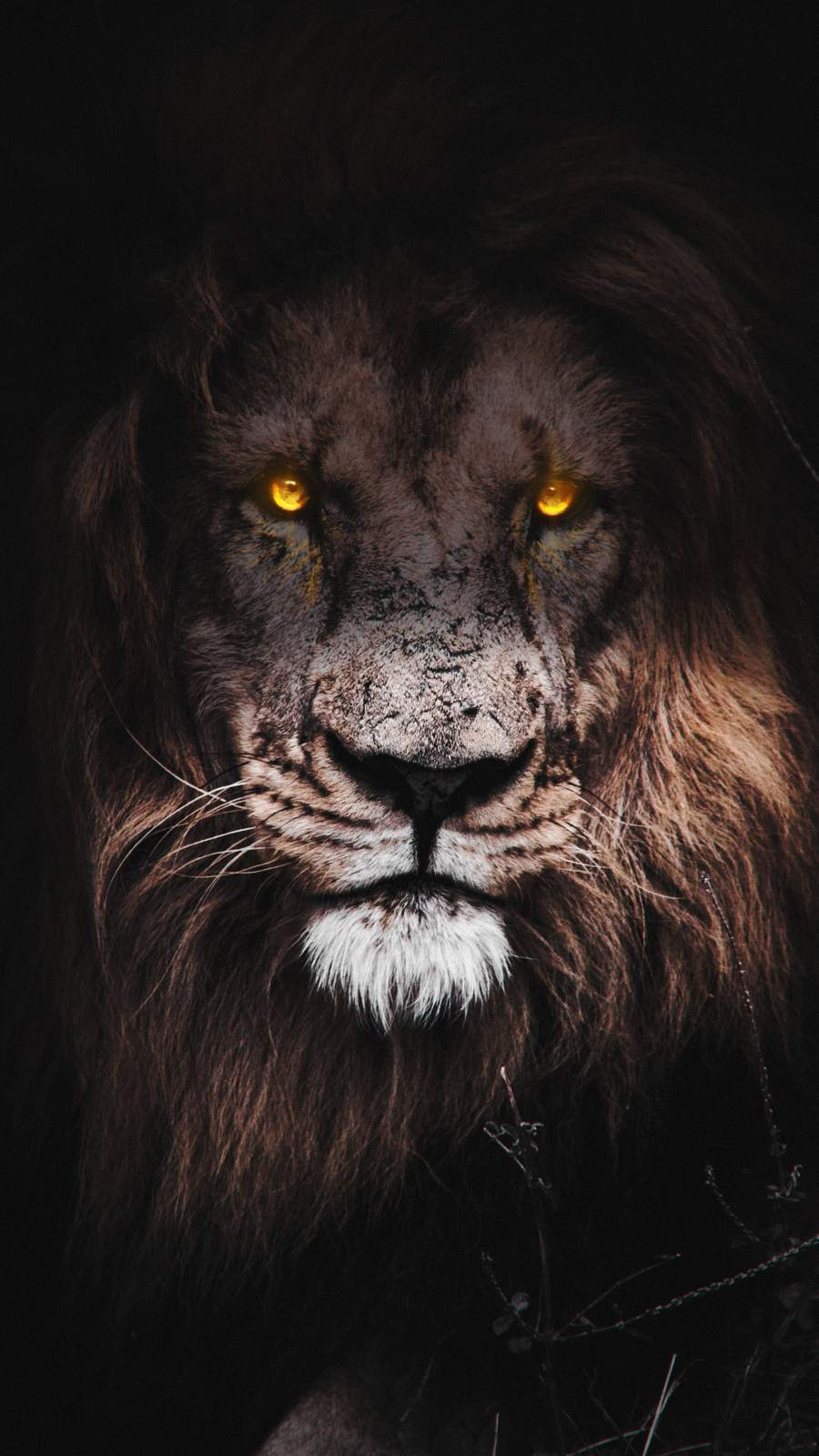 Lion Eyes iPhone Wallpaper