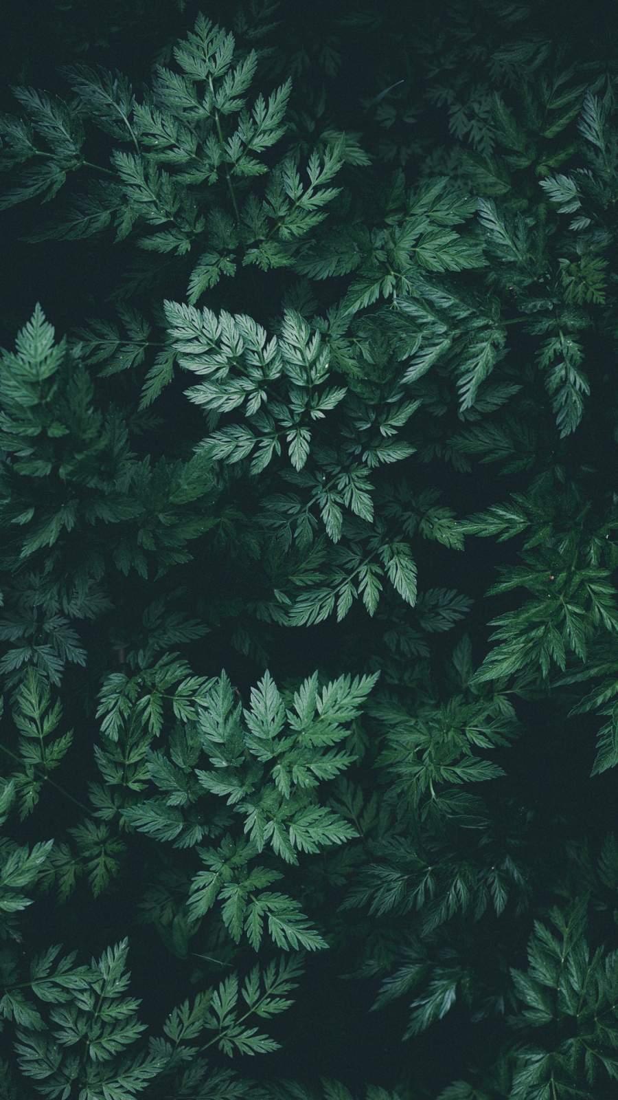 Nature Green iPhone Wallpaper